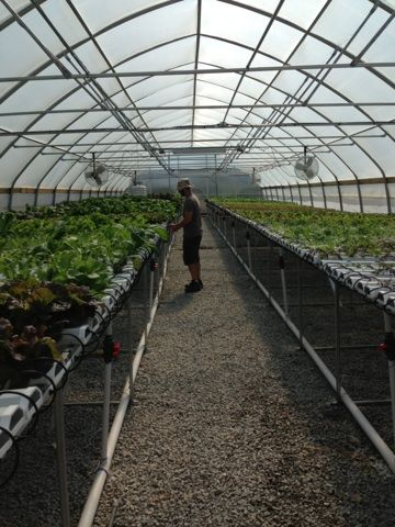 eric in greenhouse blog