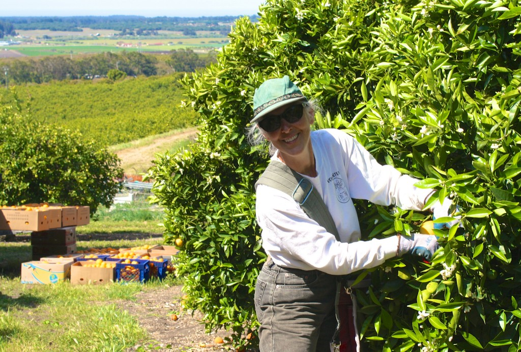 Carmela gleaning at Clamshell Farms in 2013. Photo credit: Carolyn Eicher