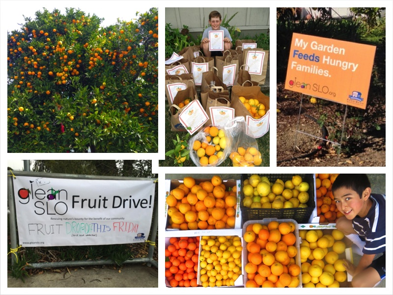 School Fruit Drive Collage 3