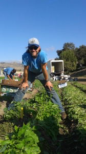 Josh at his very first glean with GleanSLO. Photo courtesy Josh Ayers.